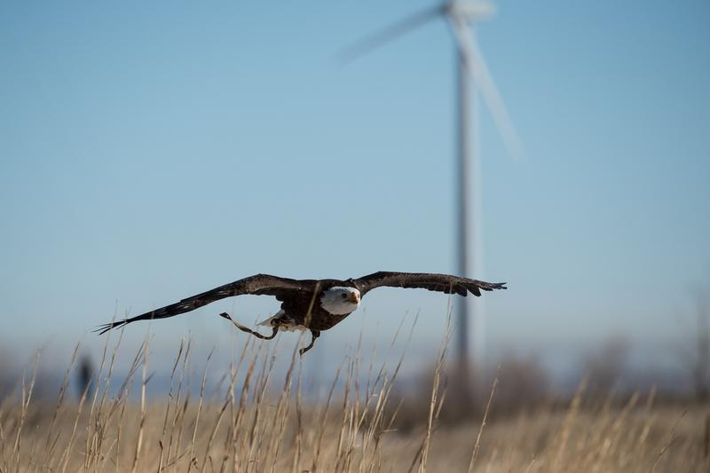 Supporters of the change in regulation argue that fossil fuel industries have been unfairly targeted by the law, but wind energy companies have received some of the harshest penalties in recent years.