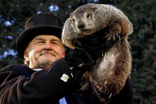 Groundhog Club member John Griffiths hold Punxsutawney Phil as he predicts the weather on Feb. 2, 2017.