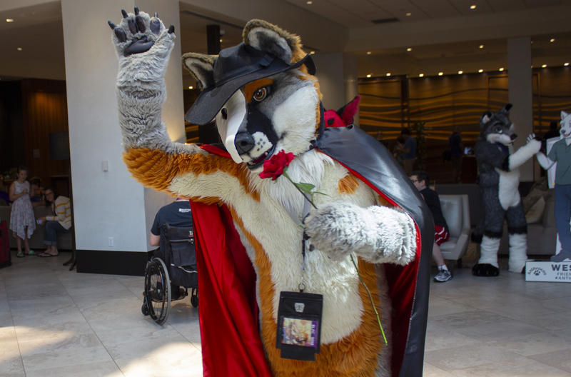 """That's one of the things that makes Anthrocon so special,"" Reo said. ""I'm just here to have fun – dance at night, be a fox and just have a good time with friends."""
