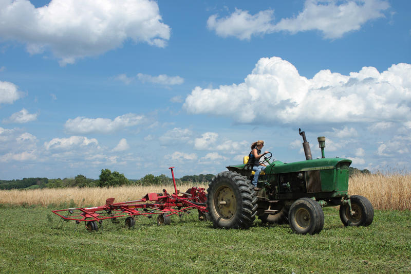 In addition to caring for the dairy herd, Friedline and her family do fieldwork and maintain the farm. Before an afternoon milking, Friedline tetted hay: in order to prevent it from lying wet in the field, she aerated it in preparation for baling.