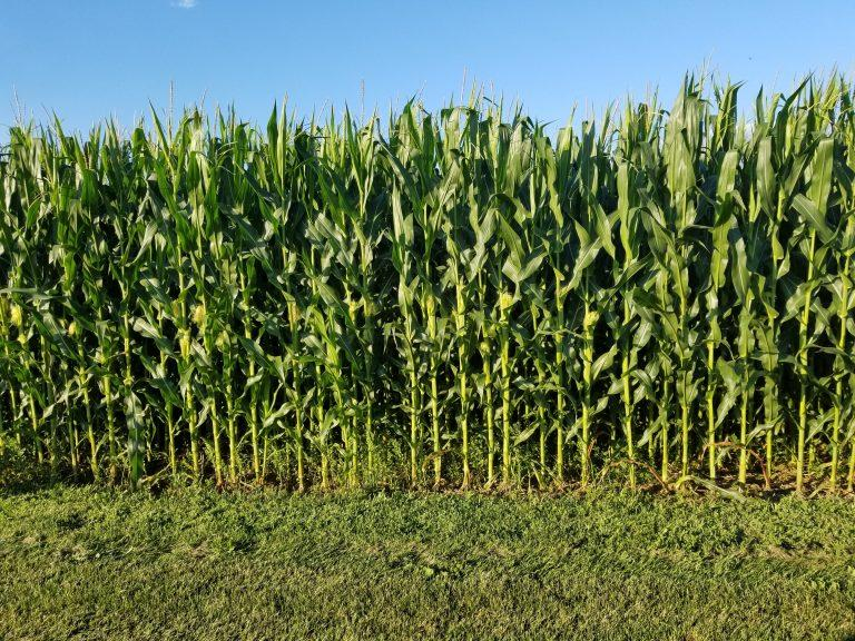 A new report out of Penn State University says corn production in the southeastern part of the state could be especially vulnerable in the coming decades.