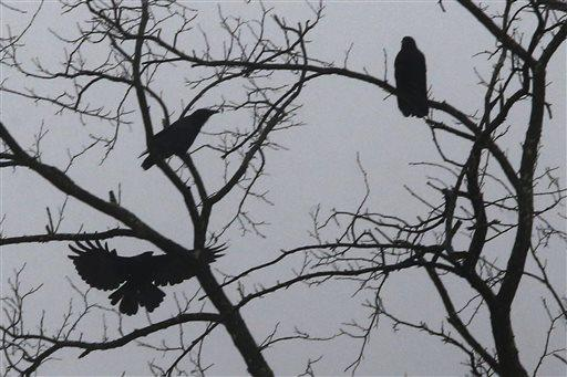 Crows gather in tree branches during an icy rain as fog shrouds Pittsburgh's Southside.