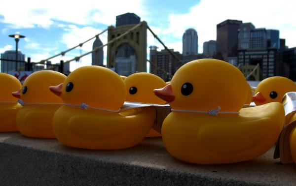 The Pittsburgh Cultural Trust has been handing out miniature rubber ducks in anticipation of the Rubber Duck Project. The giant duck will make its first American appearance on Pittsburgh's waterways Friday.