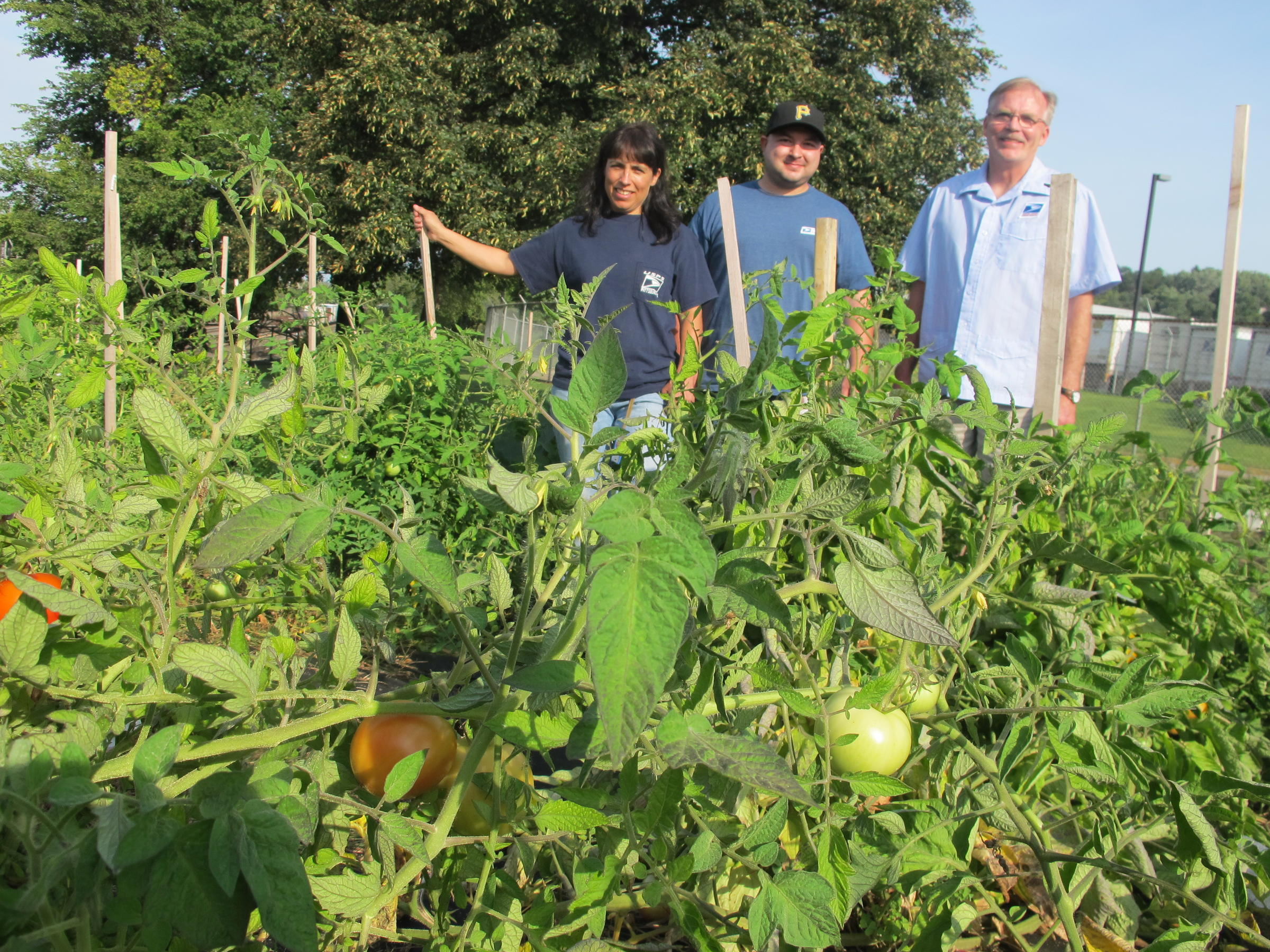 Post Office Workers Turn Empty Lawn Into Garden for the Needy | 90.5 ...