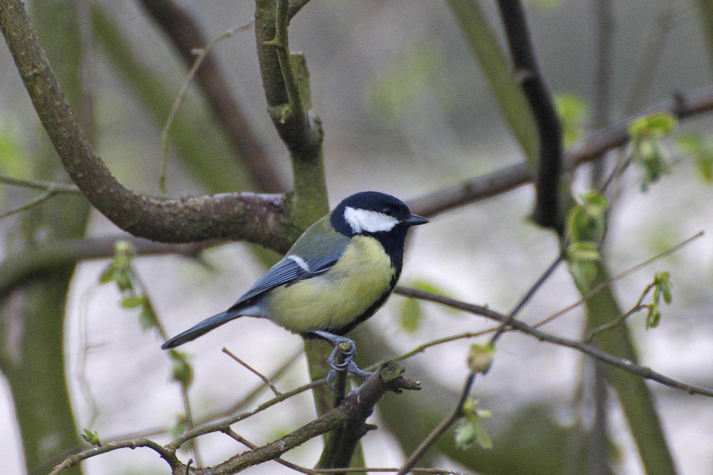 a century old tradition bird watchers gather for christmas bird