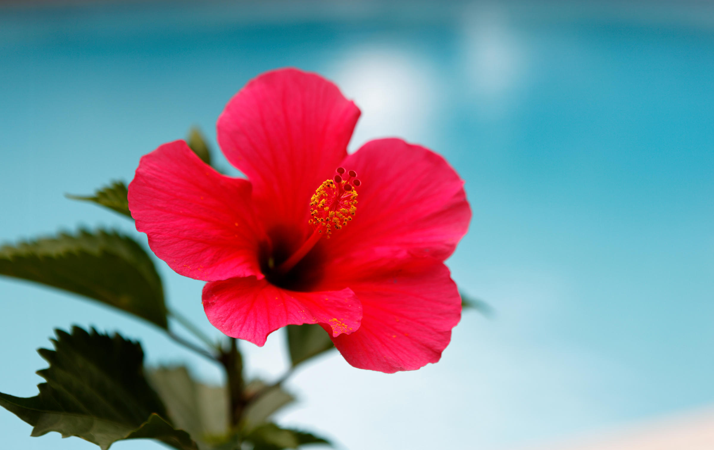 Couple Detained After Hibiscus Mistaken For Pot Files Lawsuit 905