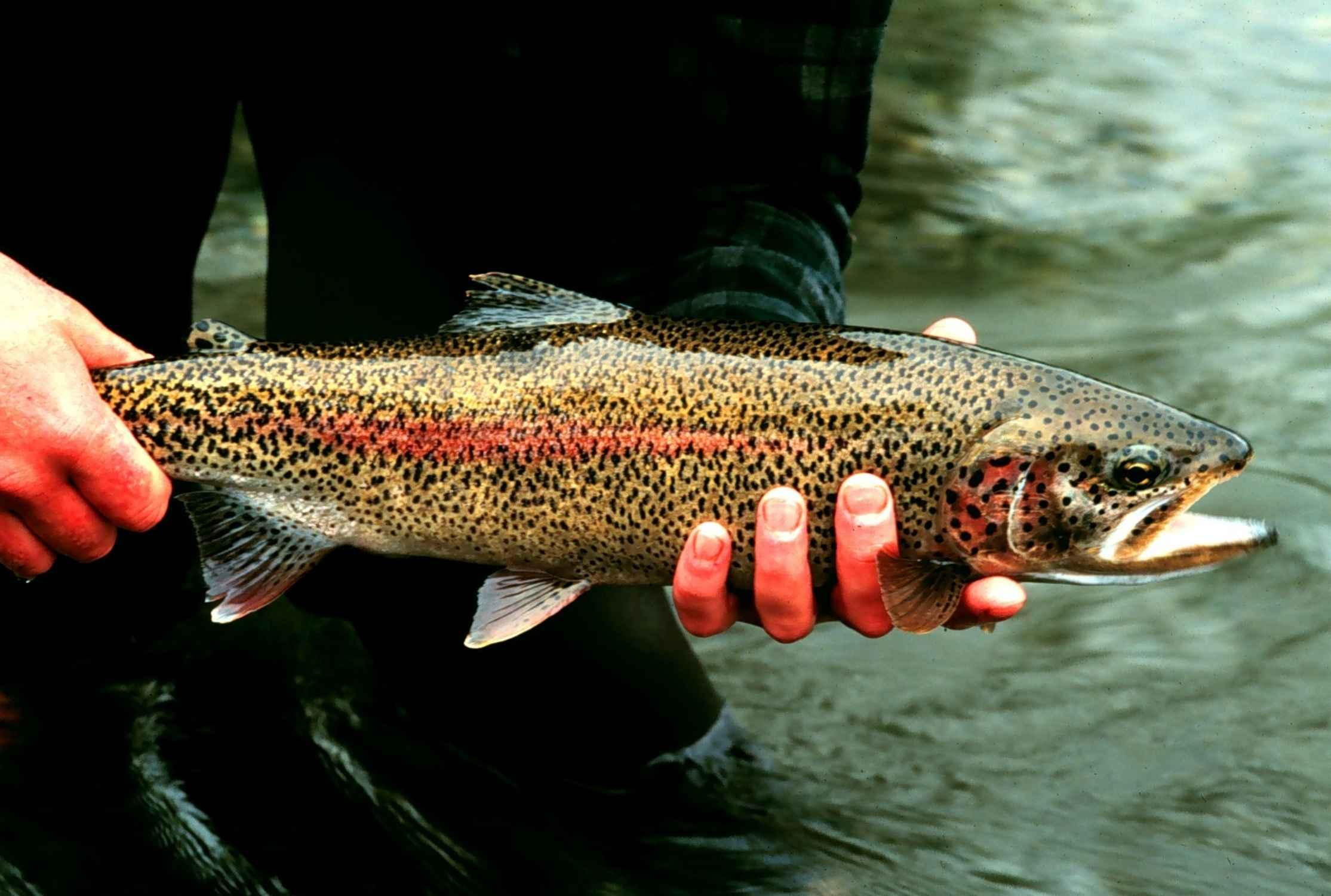 public meetings set in va. on trout stocking plan | wesm