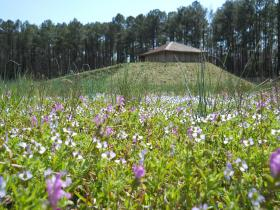 The Town Creek Indian Mound in Mount Gilead, N.C. features a 15-feet tall reconstructed mound.