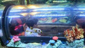 Will Joseph, 10, goes into a mini-underwater tank to look at the fish up-close.