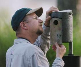 """I've always liked birds since I was a little kid,"" said Davidson College professor Mark Stanback. Here, he's checking a nest inside bluebird house at NorthStone Country Club in Huntersville."