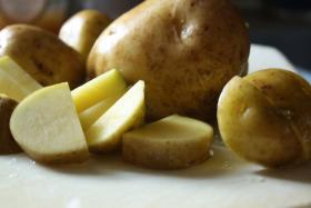 Yukon Gold potatoes are perfect for mashing, if you know how to do that kind of thing