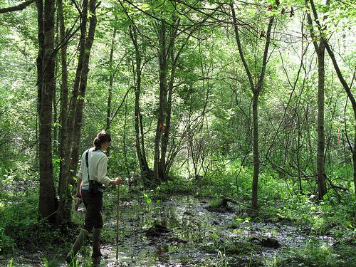 Service biologist Sue Cameron makes her way through a southern Appalachian bog May 2010