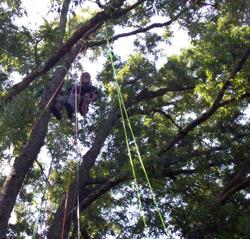 Chip Hildreth about 85' high in a tree at Freedom Park. Photo: Julie Rose