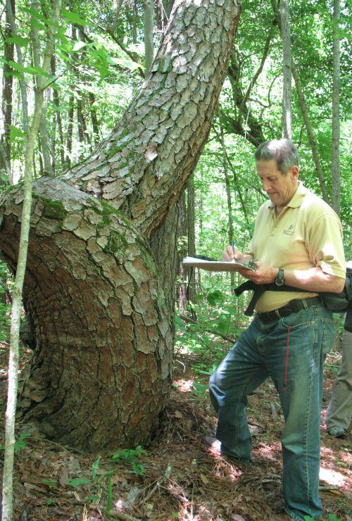 Don Wells documents a trail tree - special marker trees that were used as guideposts for Native American Trail systems.
