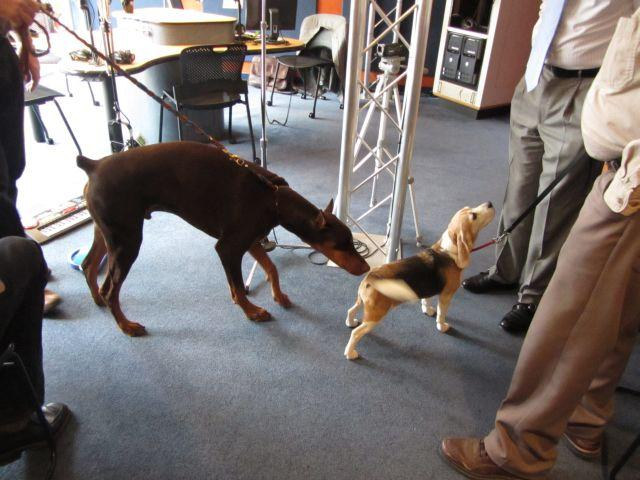 Dogs in the Charlotte Talks studio! Kiser checks out Mary.