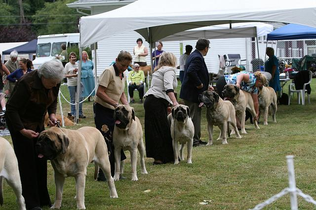 Dogs line up at the Pacific Kennel Club dog show in Surrey, BC, Canada.