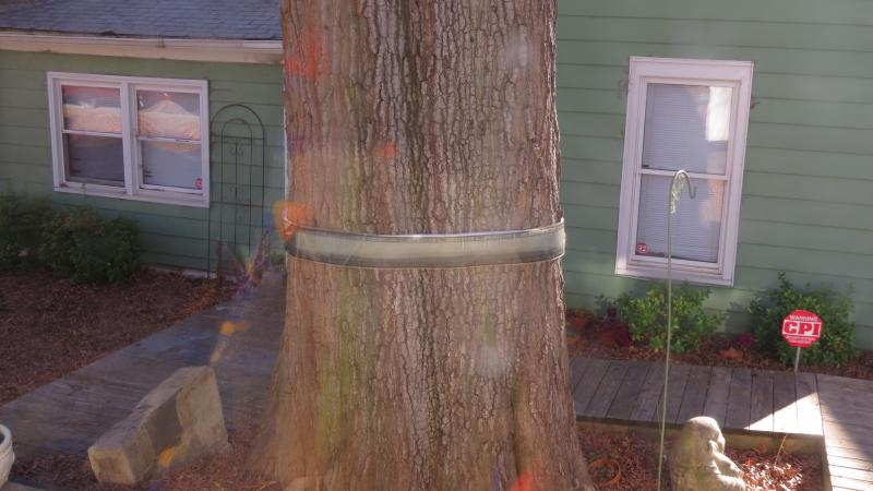 An old tree in the Beatties Ford neighborhood of Charlotte.