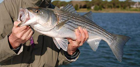 Lake norman fishing guide weighs in on pcb advisory wfae for Lake norman bass fishing
