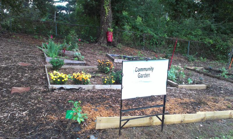 At the Greenville Memorial A.M.E. Zion Church, an economic redevelopment group called The Charlotte Chronicle planted sweet potatoes, grapes, okra, peach trees, asparagus, spinach, collard greens, mums and tomatoes.