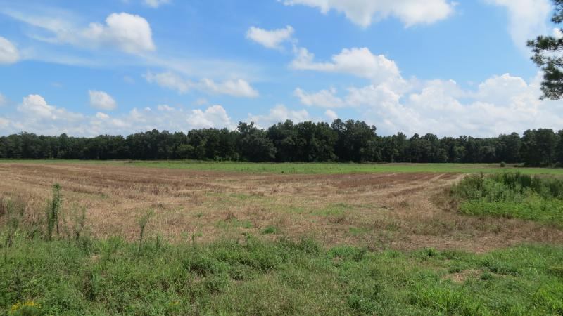 A dove hunting field in the Pee Dee National Wildlife Refuge, Anson County, N.C.