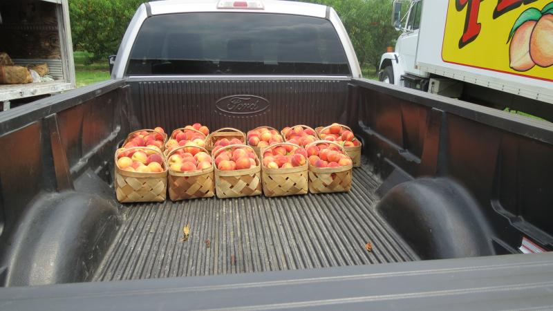 Garrett Johnson still drives some of his peaches to his family's roadside stand in his pick up truck.