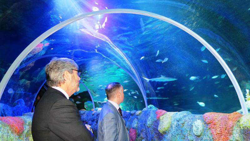 Tom Murray, CEO of the Charlotte Regional Visitors Authority, and Scott Williamson, Global Head of Marketing for Merlin Entertainments watch as rays and sharks swim overhead.