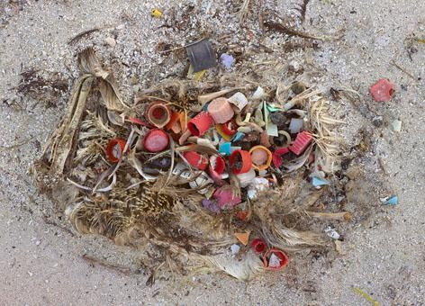 The remains of dead baby albatrosses reveal the far-reaches of plastic pollution on Midway Atoll, 2000 miles from any mainland