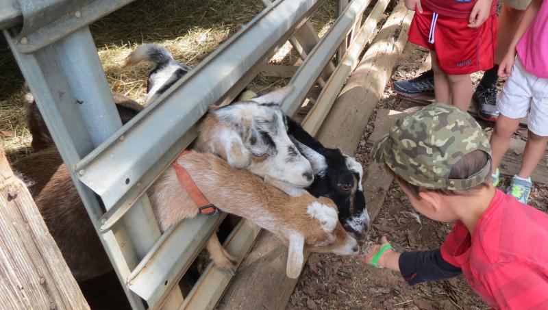 Four-year-old Nikolai Fenton feeds goats during his visit.