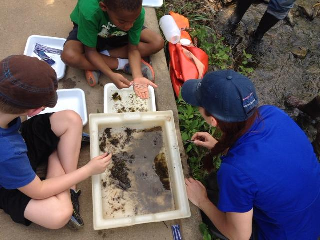 Olivia Edwards shows children a sample of caddisfly larvae, worms and leeches.
