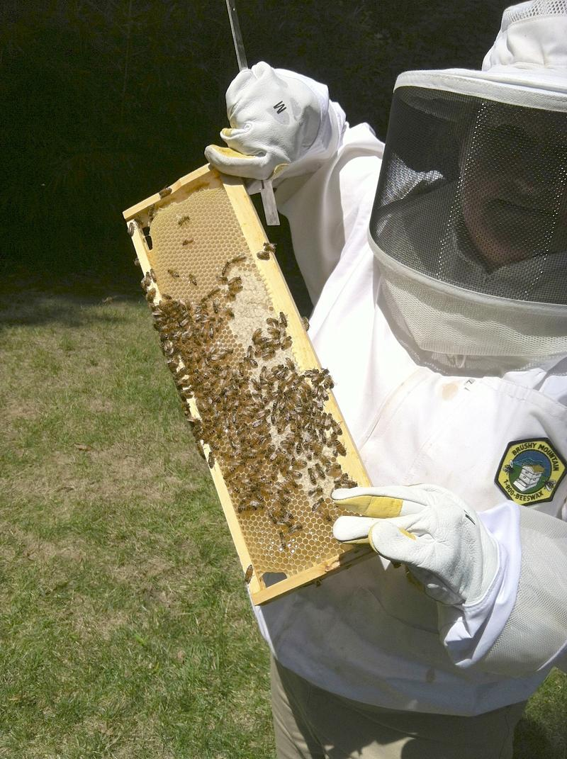 Meg Humphrey removes frames from the hive.