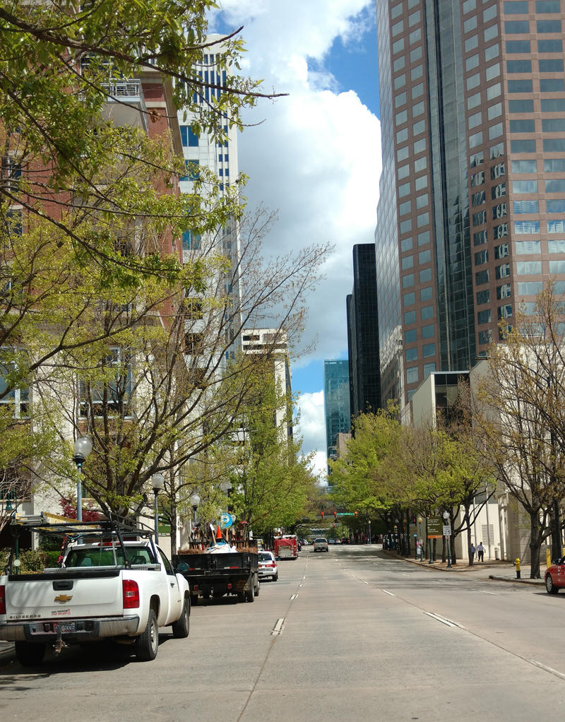 Charlotte is known as a tree city, with lush neighborhoods and even tree-lined downtown streets, like College Street.