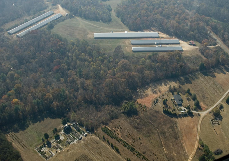 Poultry farms like these are found near homes throughout the Catawba River Valley.