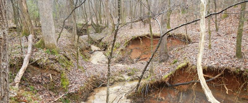 The creek beds throughout the Reedy Creek Nature Preserve.