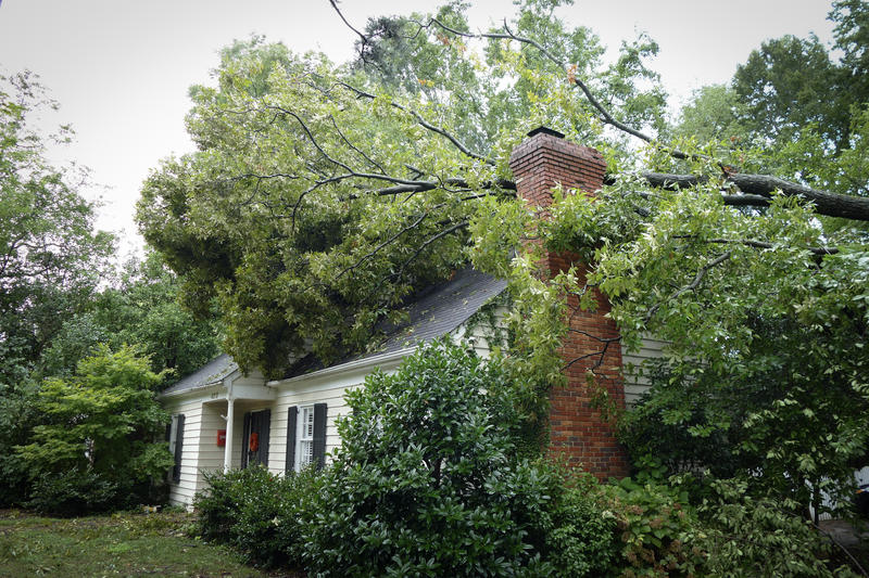 A tree fell on a house in East Charlotte.