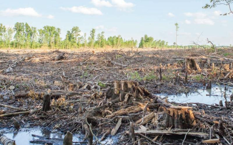 In 2015, environmental investigators observed a wetland forest being clearcut, then tracked the logs to Enviva's plants.