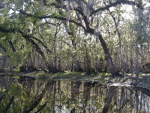 St. Johns River in Florida.