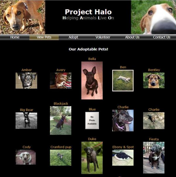 Project HALO is one of about 100 nonprofit animal rescue groups the city partners with to get pets out of shelters. Neighbors complain of noise, odor and traffic. Rescue groups say they're being unfairly targeted by the city's code enforcers.