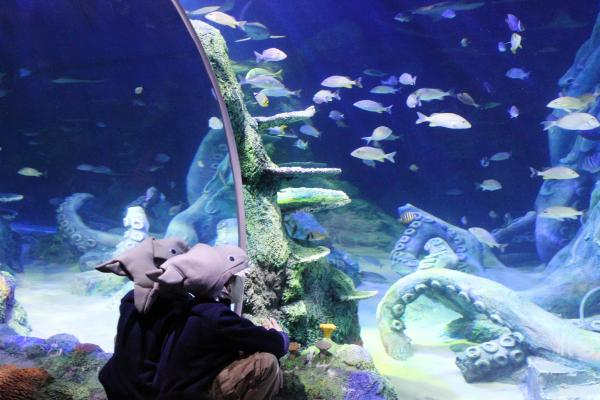 Kids in the aquarium watched as black nose sharks, cow nose rays, jewel damselfish, French angelfish, upside down jellyfish and venomous lion fish were unloaded and brought inside the aquarium.