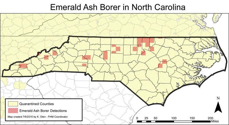 Ash Borer Beetle Devastates Lincoln County Preserves Wfae