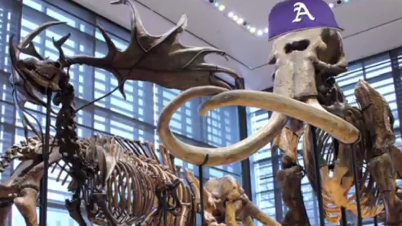Graphic of an Amherst College baseball cap on the skeleton of a Columbian mammoth, which is on display at the school's natural history museum.