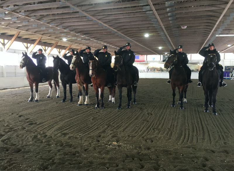 Seven members of the Worcester police force trained to join the new mounted unit.