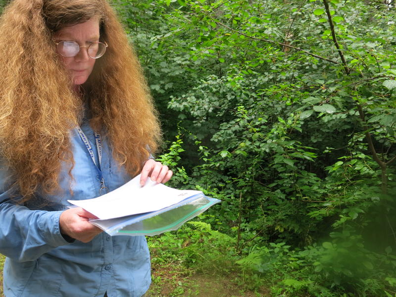 Elizabeth Farnsworth examined her notes, as she tried to find the location of the Glaucescent Sedge.