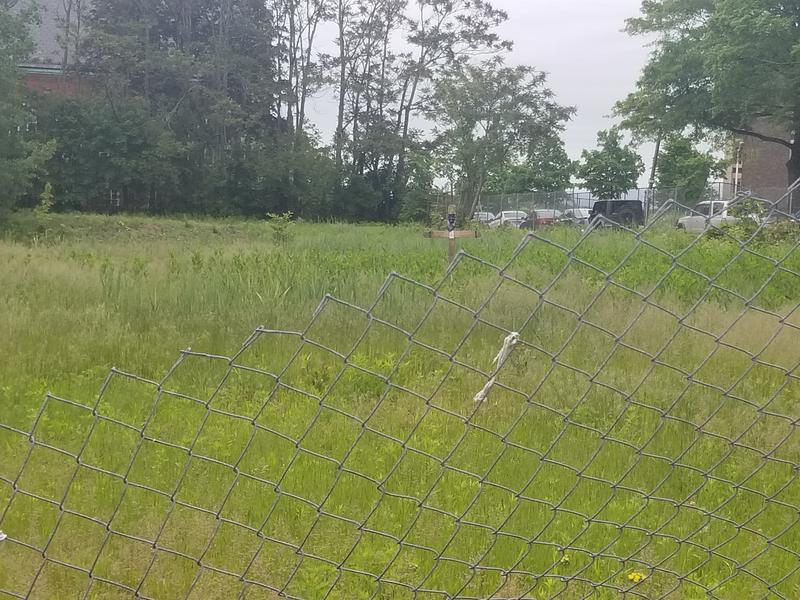 The field in Hartford's north end where the body of Angelo Milardo was found in August 2016.