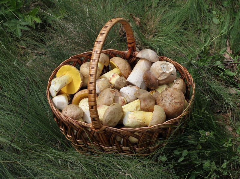 A basket of edible fungi.