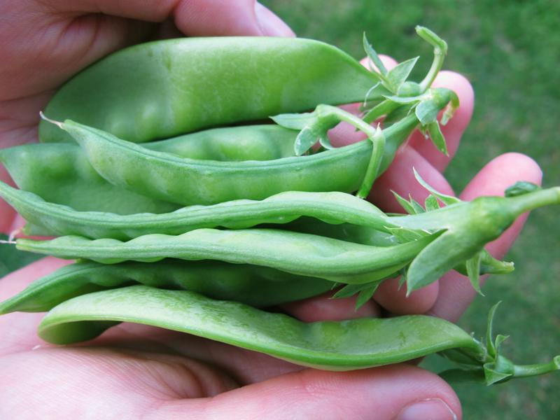 Snow peas.