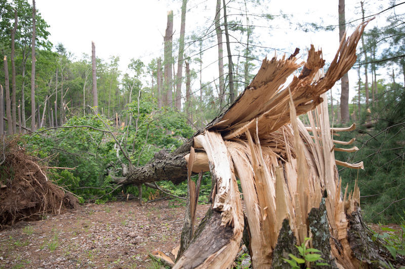 A tree snapped in the picnic area of Sleeping Giant State Park in Hamden, Connecticut. The park is closed due to damage from a May 15th storm, which included four tornadoes.