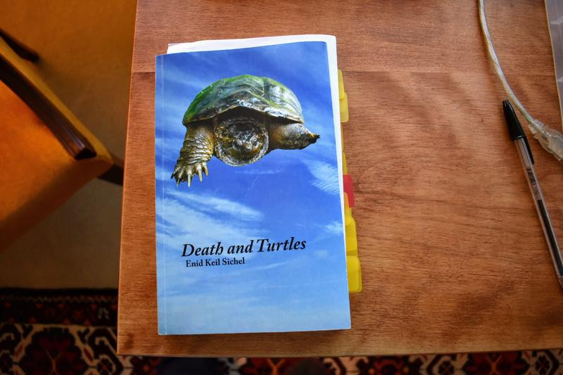 Author Enid Sichel took the photo of the turtle on her book's cover art.
