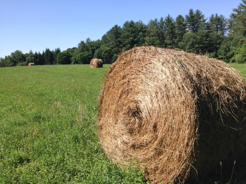 Round bales of hay in a field that have been harvested by dairy farmer Pete Williams in Shelburne, Massachusetts. He is having trouble selling them this year.