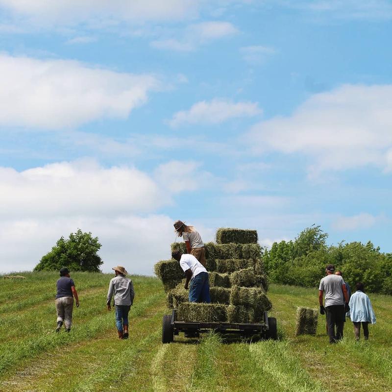 A scene from a Dismas House farm.