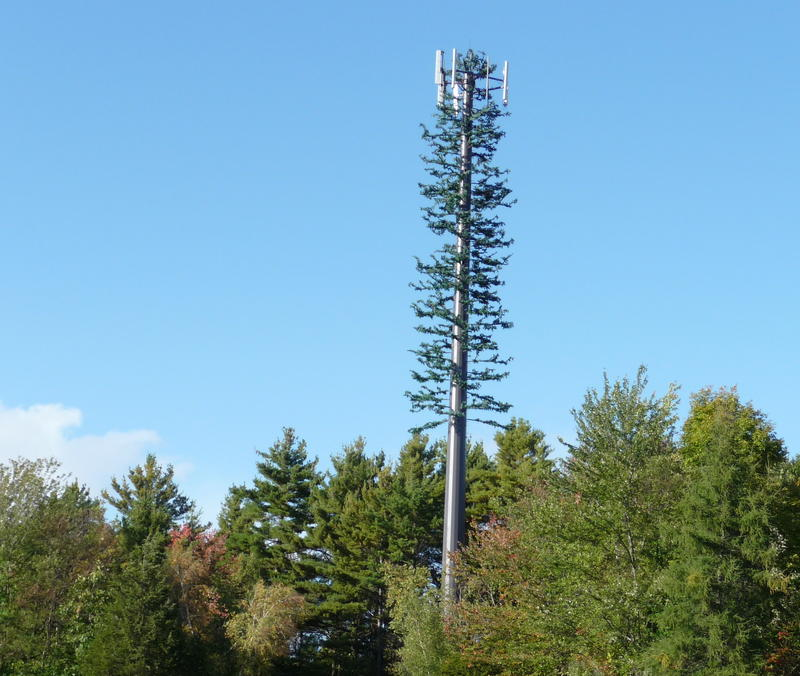 A traditional cell phone tower disguised as a tree.